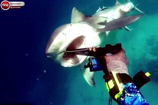 رویاروئی وحشتناک ماهیگیر و کوسه را ببینید + عکس