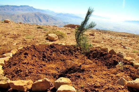 احیا جنگلهای تخریب شده کامفیروز