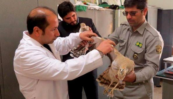 دستگیری شکارچیان سه هوبره در خواف
