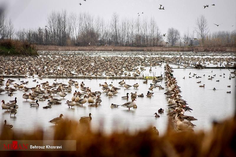 پایش زیستگاه پرندگان در پاسارگاد